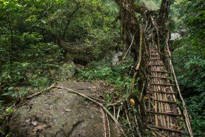20141019_Living_root_bridge_17