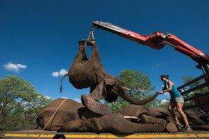 Elefantes-002