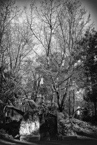 Naturaleza-Arboles-001-I.Garces
