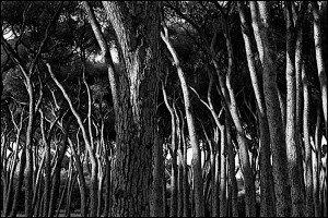Naturaleza-Arboles-006-I.Garces