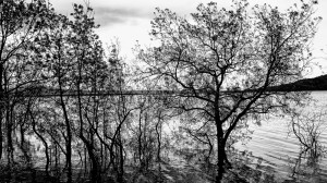 Naturaleza-Arboles-010-I.Garces