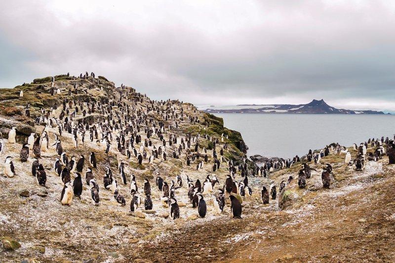 Antartida-1