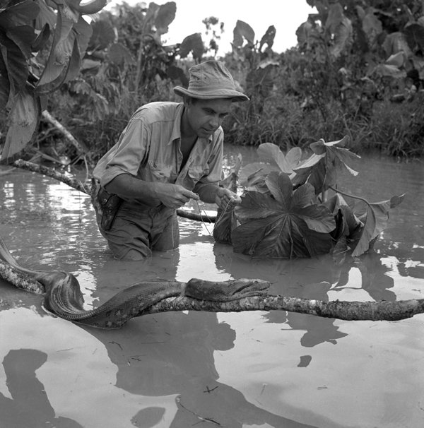Río San Miguel, frontera colombiana, 1952.